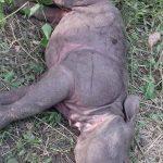 चितवन राष्ट्रिय निकुञ्जमा पाँच महिनाकी केटी मृत फेला
